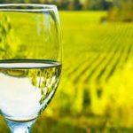 come si fa un vino bianco